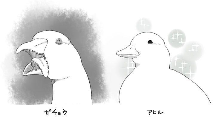 鴨 と アヒル の 違い