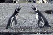 【画像】ペンギンさん脳が破壊される