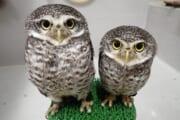 【画像大量】フクロウとかいう生き物wwwwww