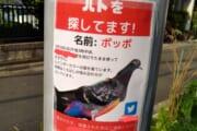 【画像】行方不明になった鳩の名前が安易すぎる