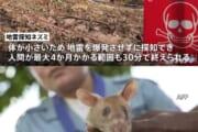 地雷を見つけるネズミがすごすぎるwwwwwww