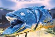 【雑学】古代の魚って不味いのかな???