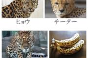 【画像】あの動物の見分け方wwwwwwwwwwwww