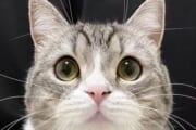 【YouTube】「もちまる」とかいう美猫wwwwwwwwwwww