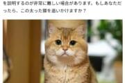 【画像】ネットで人気の猫、なぜか貶されるwwwwwwwwww