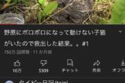 大人気Youtuberのタイピー日記さん、またまた野原に捨てられた猫を発見して飼い始めてしまうwwww